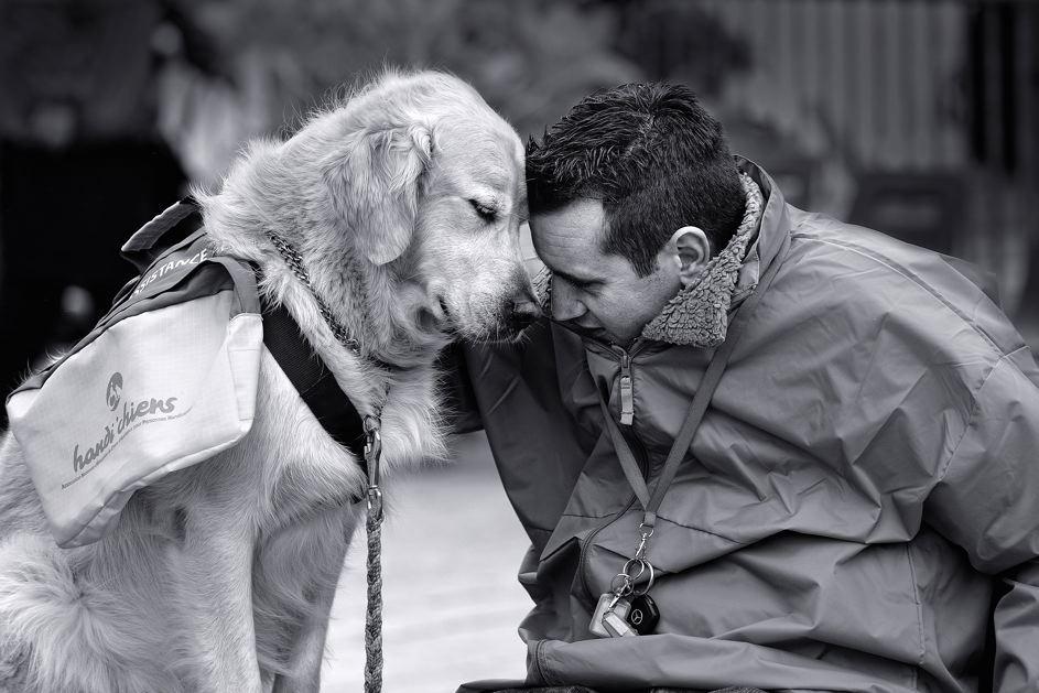 Dog Training Mission Statement